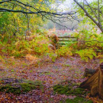 Woodland Near Birchmere Scout Campsite